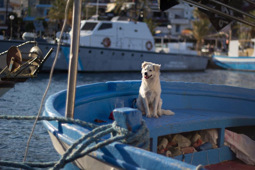 Fischerboot im Hafen Agia Galini